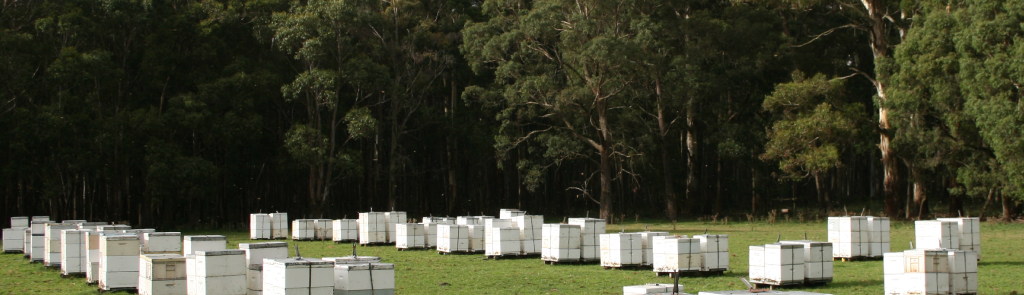 Archibald's Honey beehives image